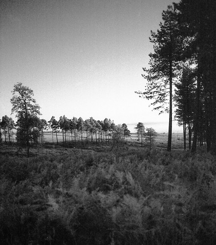 Milkham Evening IR #1 | by Skink74