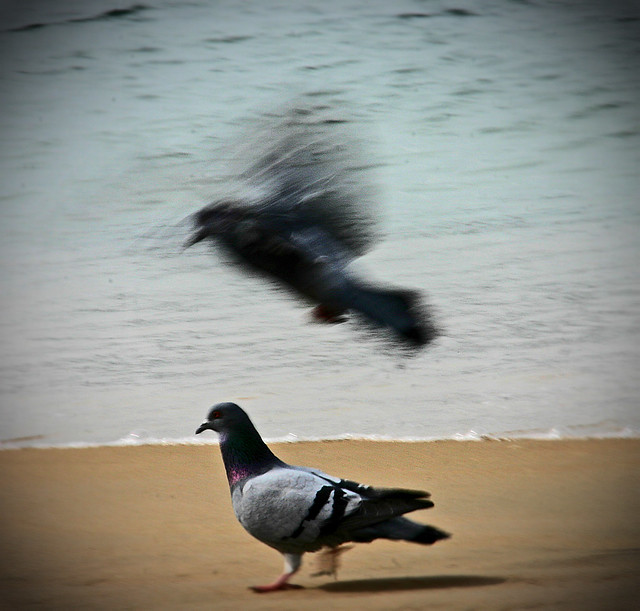 Bird landing on bird