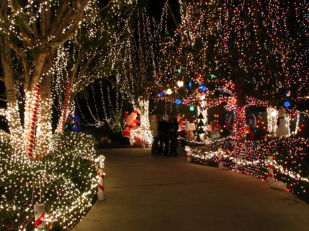 Enchanted Christmas.Enchanted Christmas Forest See Any Elves Robert Wilson