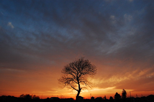 sunset tree japan tokyo inzai tokyoto
