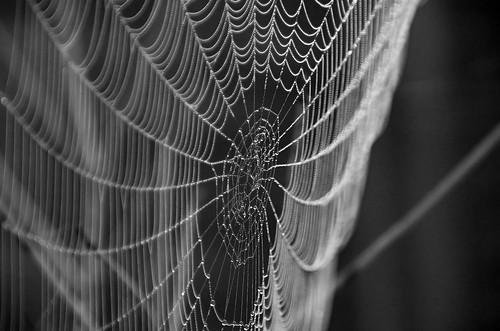 Web | by zzathras777