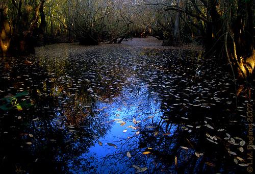 color fall leaves river foliage slough satilla onlyyourbestshots