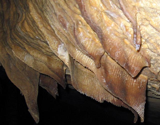 Bacon, Blue Spring Cave, White Co, TN