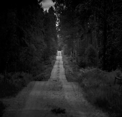 adventure canon nature canoneos6d blackandwhite eos ef100200mmf45 forest hiking hike landscape monochrome outdoors outdoor road travel tree wildlife