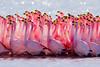 Flamingo by szeke
