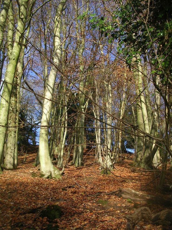 Trees Petersfield to Liss