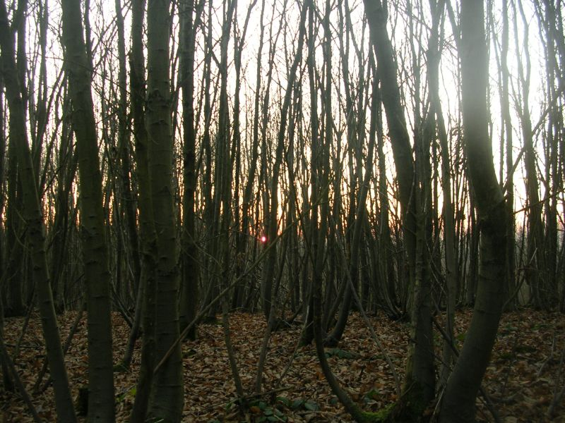 sun through trees Yalding to Borough Green