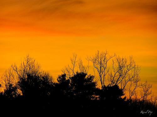 trees winter colors flickr seasons unitedstates time saturday maryland sabbath northbethesda googlephotos olympusc770uz