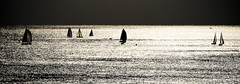 Barche a vela / Sailing | by Alex Scarcella :: http://www.ccworld.it/