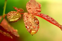 capture - raindrops | by utpal.
