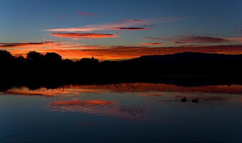 birds sunrise outdoors ducks fowl sbcusa