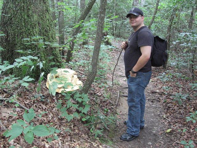 Charles Winnett, Meripilus giganteus, Virgin Falls Pocket Wilderness, White County, Tennessee