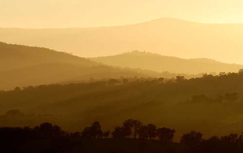 sunrise nikon melbourne ground kangaroo d200 j9 2xtc sigma70200exf28macro