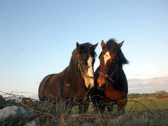horses-in-Ireland | by For91days