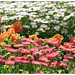 110514 flowers03