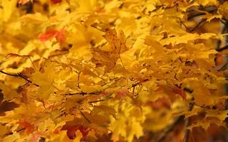 Encore des feuilles / More Leaves | by meantux