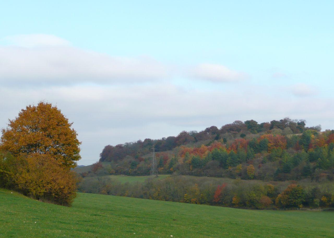 Book 3, Walk 35, Cuxton to Sole Street Leaf colour, 3 November '07.