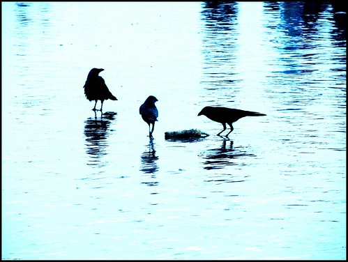 Water Water everywhere.. Crows in between :)