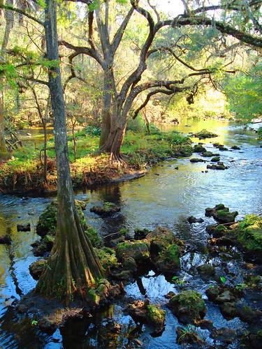 cypresstrees hillsboroughriverstatepark