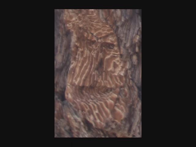 380a_Tamarack-Valley-Face-Tree