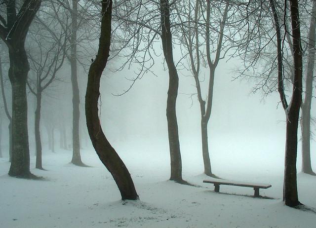 Bosque de Hayas - Invierno