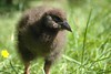 Baby Weka by cheeseloaf