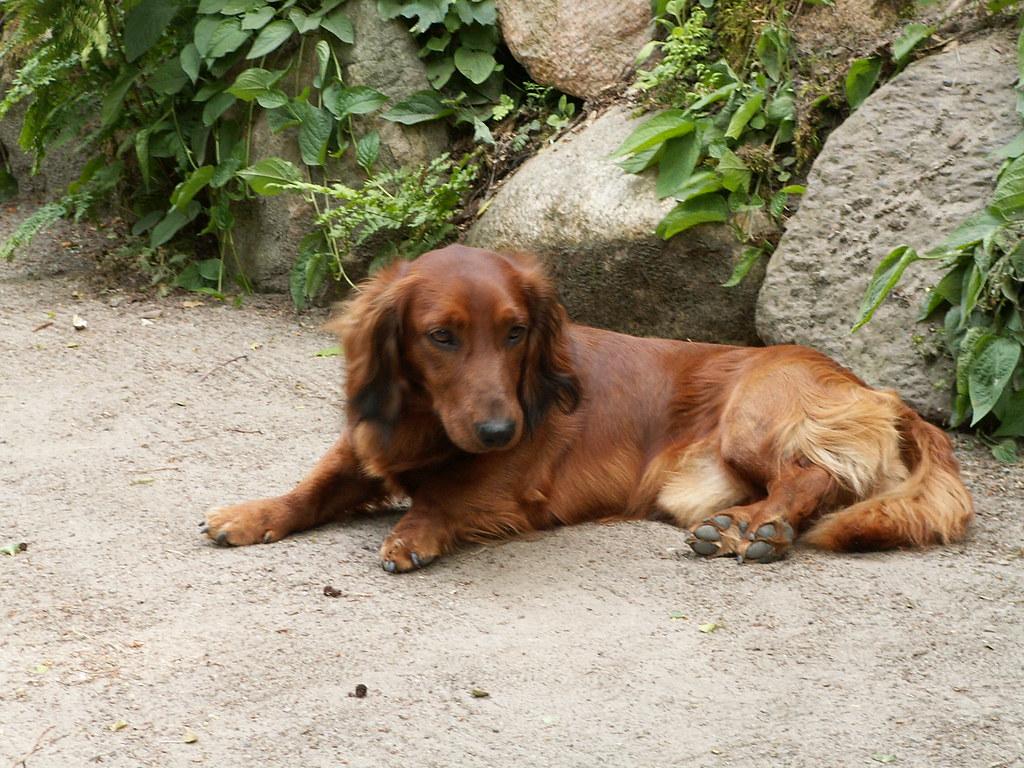 Pension Forsthaus - Hundebesitzer möchten in der Regel auch die schönste Zeit des Jahres mit ihrem Liebling verbringen und ihn mit in den Urlaub nehmen. So müssen Sie sich keine Sorgen um Ihren Hund machen 187