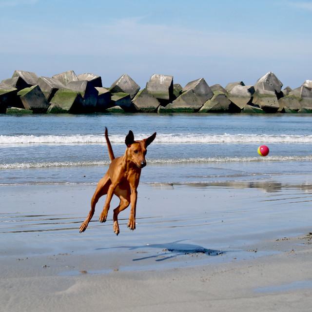 salty dog !