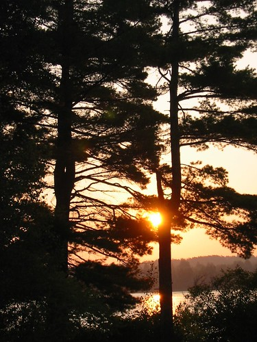 morning trees pine sunrise newcastle newbrunswick enclosure miramichi