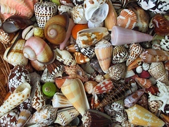 shell 8 | by fontplaydotcom