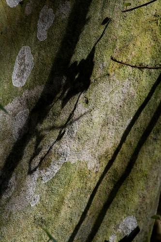 Foglie e ombra di foglie by Carlo Columba