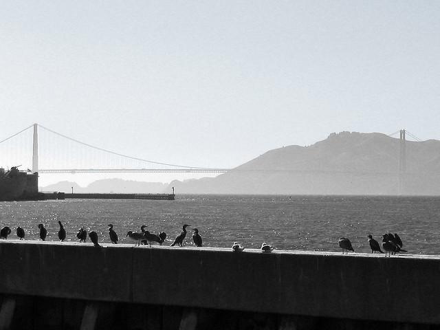 Golden Gate view - San Francisco