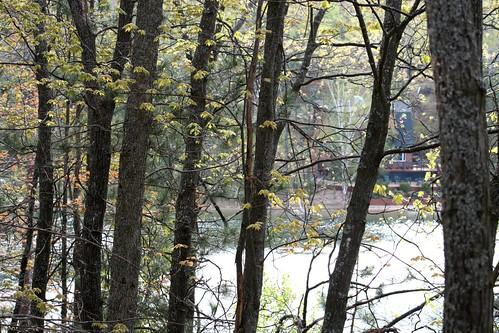 trees lake forest michigan upnorth