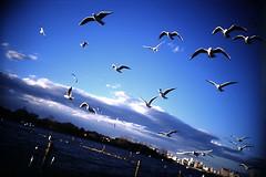 gulls | by photosapience