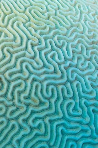 Brain Coral | by DaseinDesign