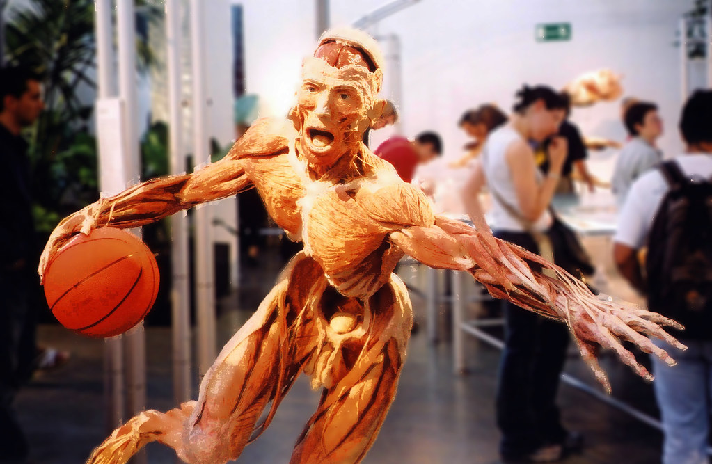 Image result for body worlds london