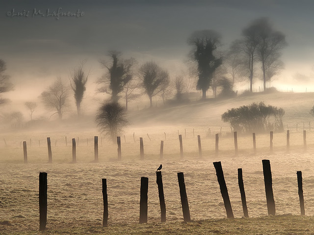 Amanecer con niebla - Sunrise with fog