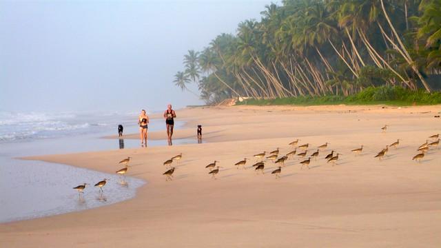 Koggala  Sri Lanka