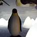 2d / 3d penguins