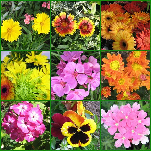 mosaic My Flowers! | by marilynnm63