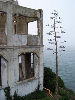 Alcatraz | by Michael Ingrassia