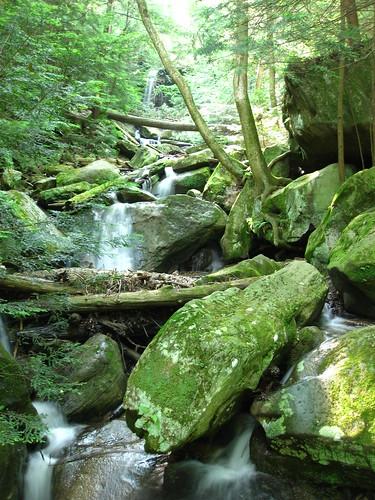 tree water rock waterfall mcconnellsmillstatepark rockscrambles