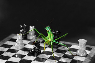Playing Mantis | by mysza831