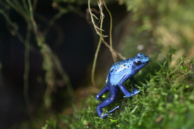 Dig that Purple Frog, Man...