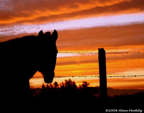 show ranch morning horse orange usa sun color colour field silhouette sunrise washington glow farm pasture barbedwire land 2008 barbed ontheroad equestrian raja corral sunup daybreak loh greatphoto wakeupamerica dreamsoflight whyiwaslatetoworkthismorning bestofsunlight