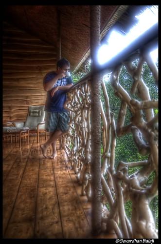 morning house tree tea kerala tranquil hdr wayanad