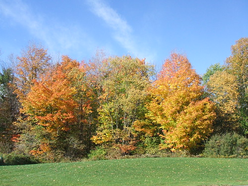 autumncolours fallcolors findleylake ny newyork upstatenyandpa geordiemac allegany ©2007georgemcvitiesomerightsreserved trees clouds sky