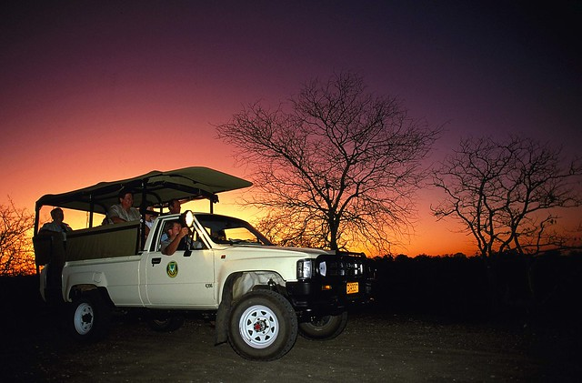 Night Drive in the Kruger - South Africa