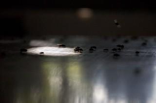 mosca común | by titín
