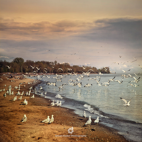 seagulls lake canada birds landscape island fly scenery torontoisland lakeontario idream thebestofday gününeniyisi